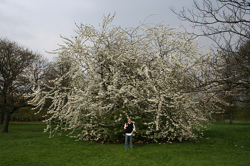 I made Scotty stand in front of this tree to show you how huge it was!