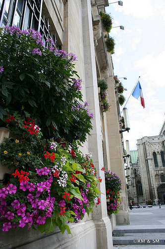 Colorful flower boxes at the Hotel de Ville