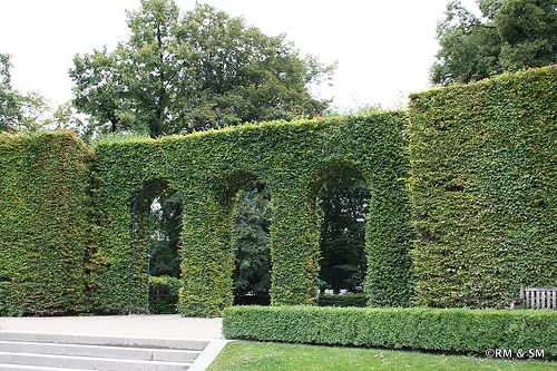 Beautiful shrubbery arches